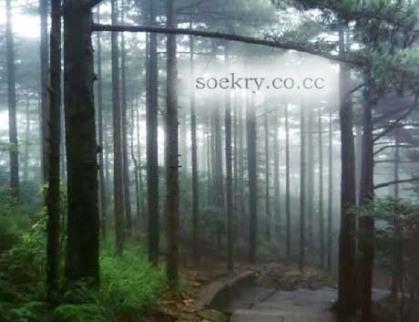 Cinta dan Hutan